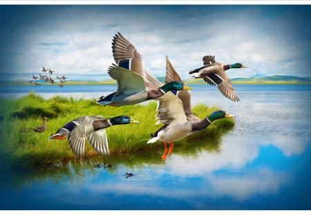 Mallard Call of the Wild Digital Panel, 29in x 43-3/4in