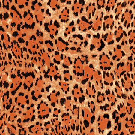 Sunrise Leopard