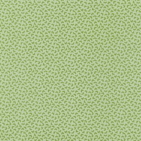 Eucalyptus Sprouts