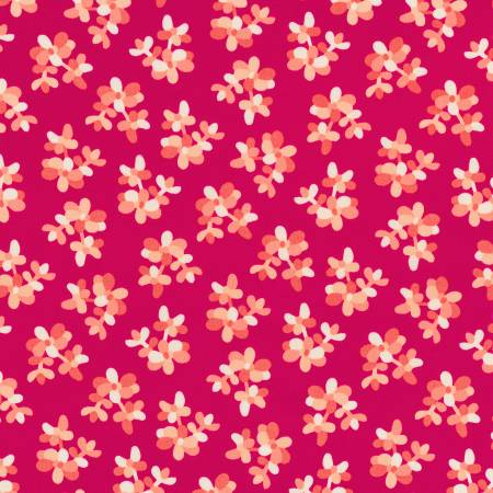 Plants Pomegranate
